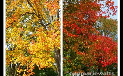 Leaves Are Changing…New Hair Color?