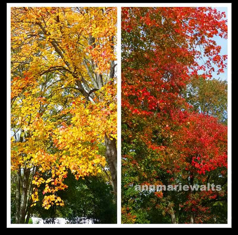 Changing-Your-Hair-Color-Fall-Leaves